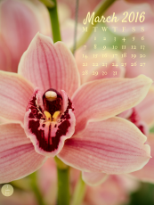 Free Ttblet wallpaper download with calendar